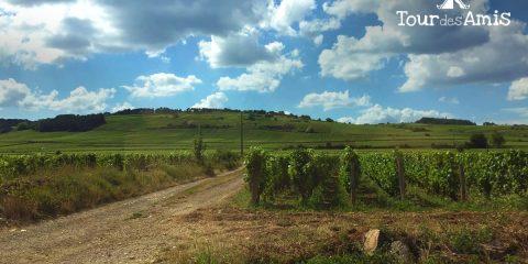 Dag 2 | Tour des Amis: wijn en fietsen