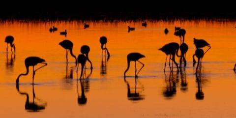 Fietsend vogelen in de Camargue