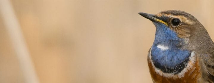 Kamperen & vogelen: 4 hotspots in Europa