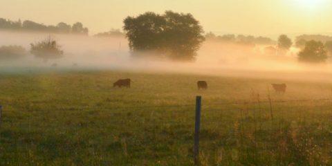 Van koeknuffelen tot wijnproeven: kamperen bij de boer!