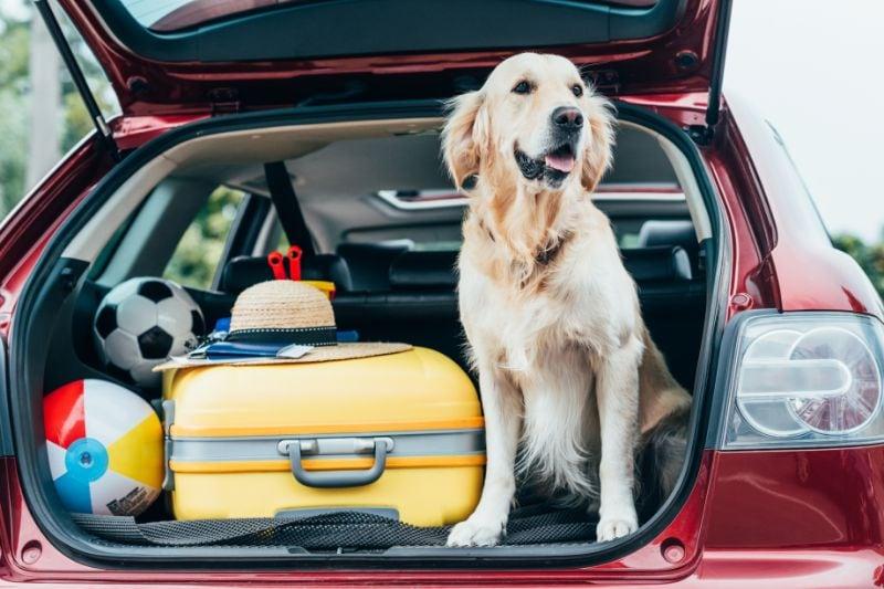 Hond in de auto voor vakantie