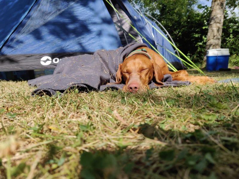 Hond slaapt bij tent