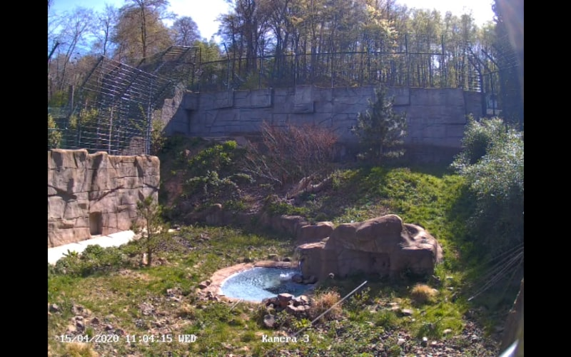 Het verblijf van de sneeuwluipaarden van de Neunkirch Zoo.