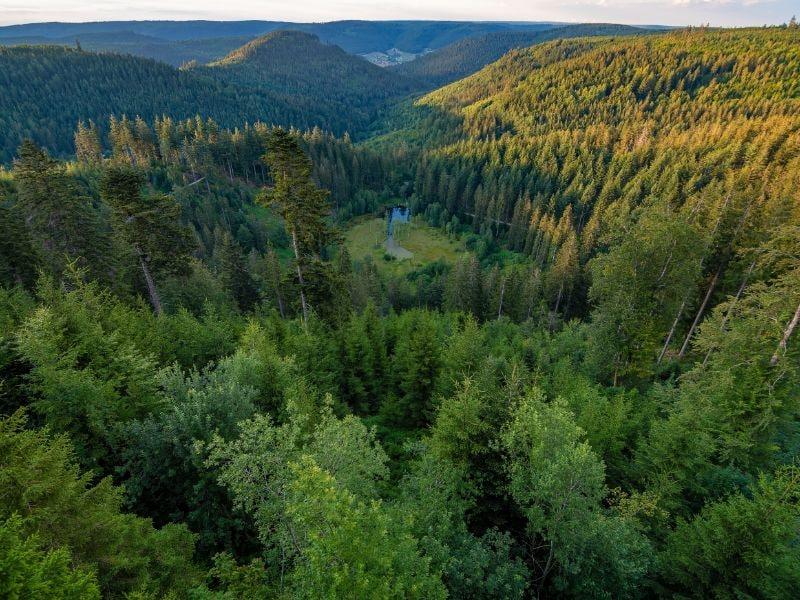 Wonderschone natuur zo ver je maar kunt kijken. Nationalpark Schwarzwald is een uniek natuurgebied.