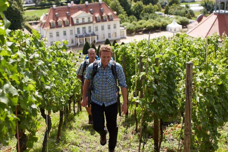 Schloss Wackerbarth Weinbergswanderung
