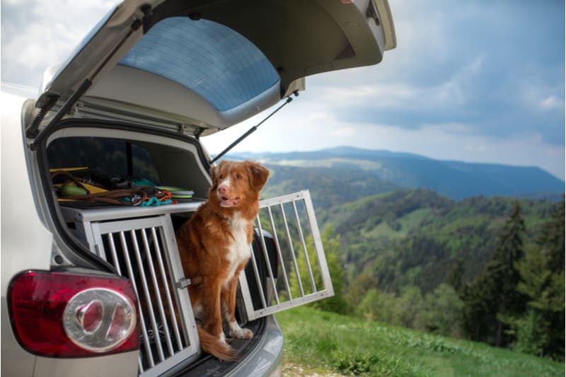 Hond in de reisbench